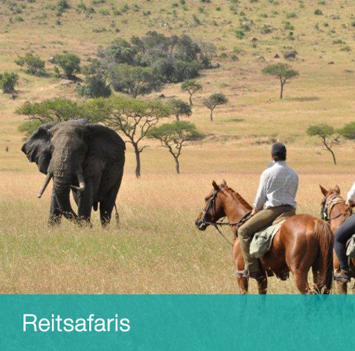 Reitsafaris in Afrika