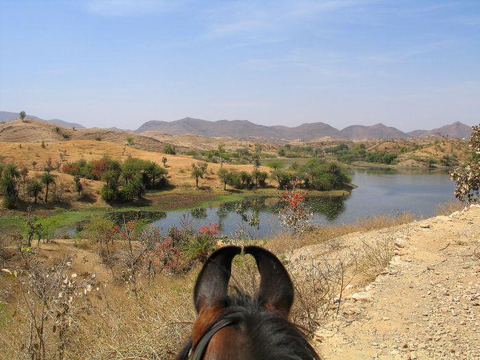 marwari pferde kaufen
