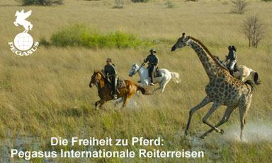 www.reiterreisen.com