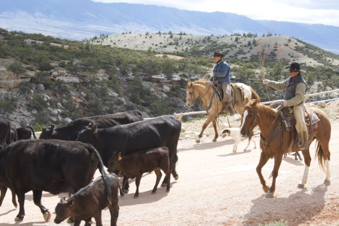 Dryhead Ranch Cattle Drives