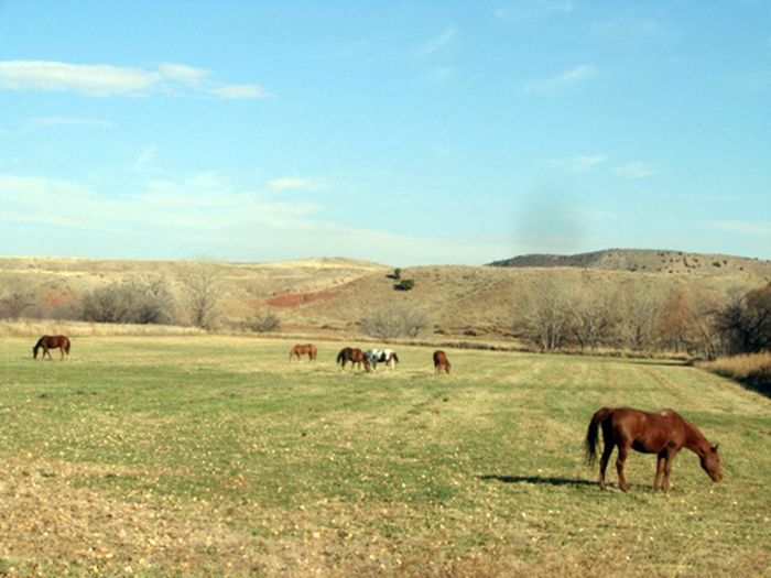 Two Creek Cattle Ranch