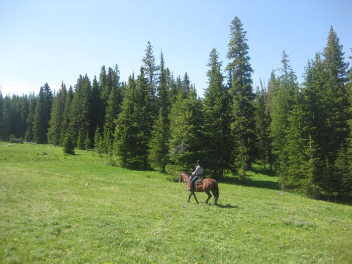 Bighorn Mountain Ranch