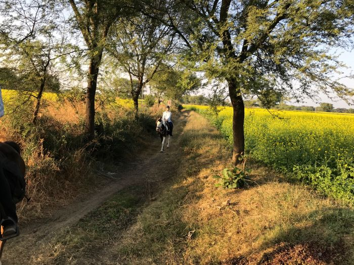 Mewar Trail, Reitsafari in Nordindien