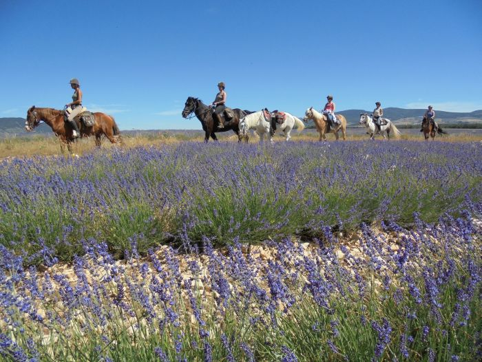 Provence & Camargue Ritte